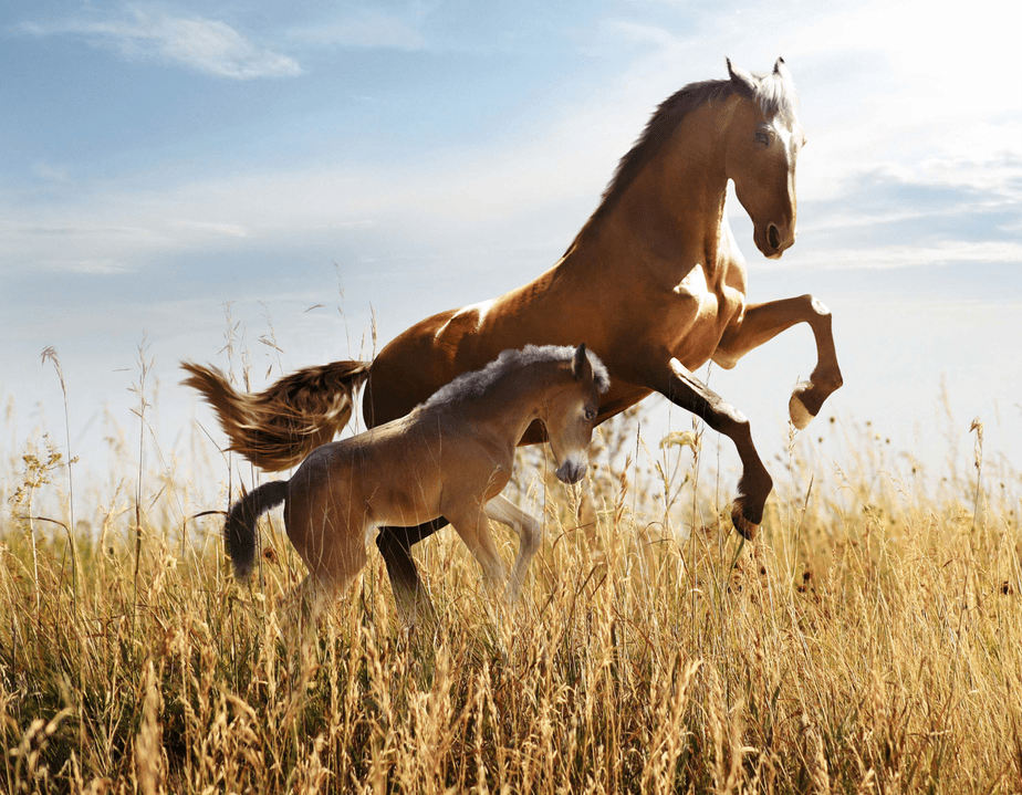Horses Wild And Free 3d Picture Nu Venture Llc